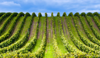Buying Guide Wines and ChampagneGrands Crus