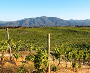Vin de Pays de L'ile de Beauté